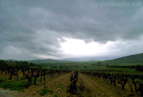 Vineyard Provence Photography Views Romanticism 普罗旺斯 葡萄园 风光摄影 浪漫主义 Yalan雅岚 黑摄会