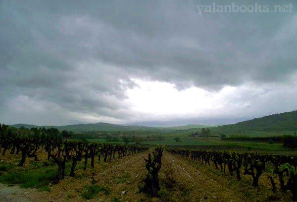 Vineyard Provence Photography Views Romanticism 普羅旺斯 葡萄園 風光攝影 浪漫主義 Yalan雅嵐 黑攝會